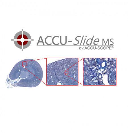 ACCU-SlideMS Manual Slide Scanning System
